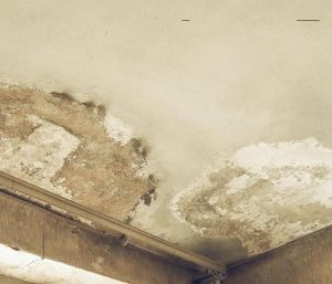 Read more about the article Homeowner's insurance and water damage