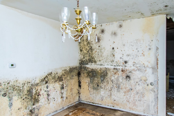 Mold Remediation Begins At Alabama School Office