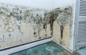 Types of mold and the dangers they bring