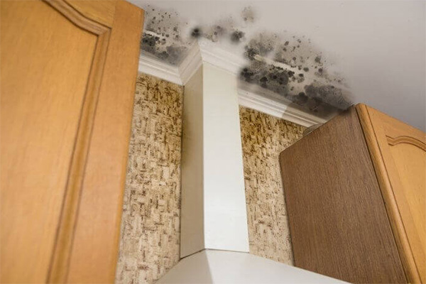 You are currently viewing Residents of apartment building forced to evacuate due to mold
