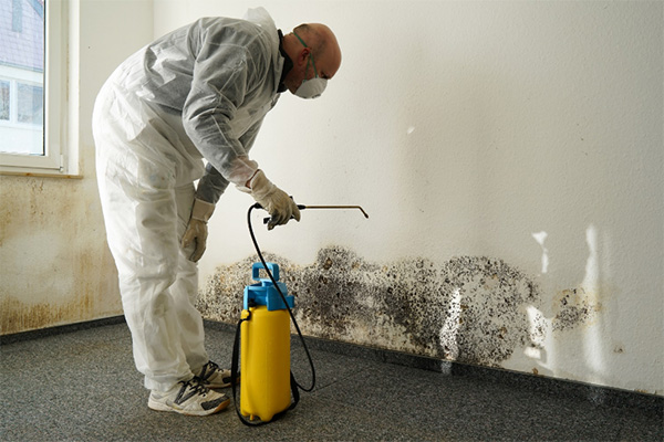 Useful Tips To Reduce Mold Growth In Your Home