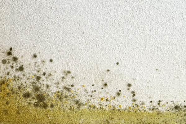 Mold in space? It's tougher than you think!