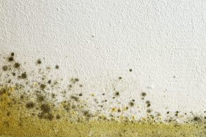 Mold growth in apartment sparks concerns from mother of 2 children