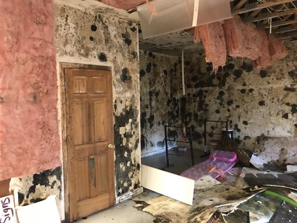 Mold Remediation –  Before