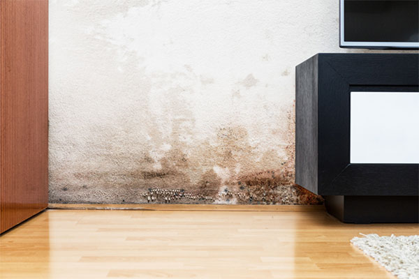 You are currently viewing Things you can do to minimize the risk of mold in your home